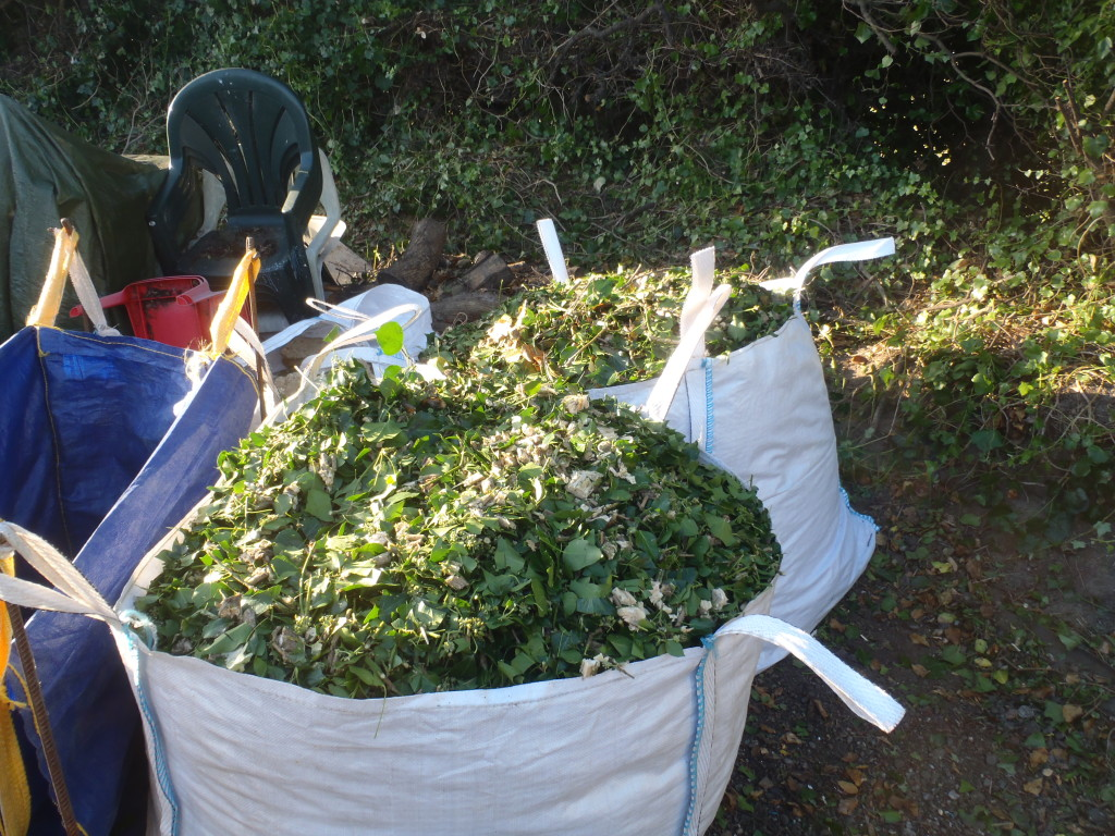 Hedge-Trimming-Day-2-Doubled-up-on-the-shreddings